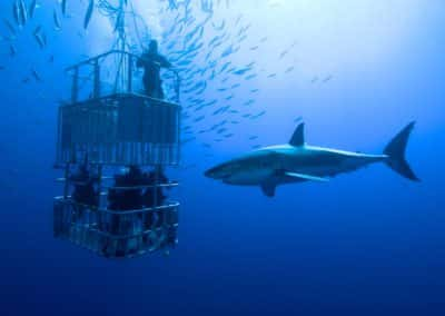 worlds-ultimate-adventure-camp-mossel-bay-2016-Shark Cage Diving1204-634-227